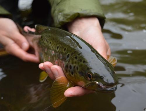 Frühlings-Fischerei 2015