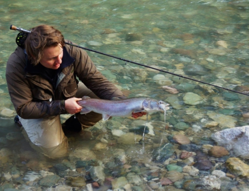 Fly Fishing for Hucho Hucho …the German Taimen