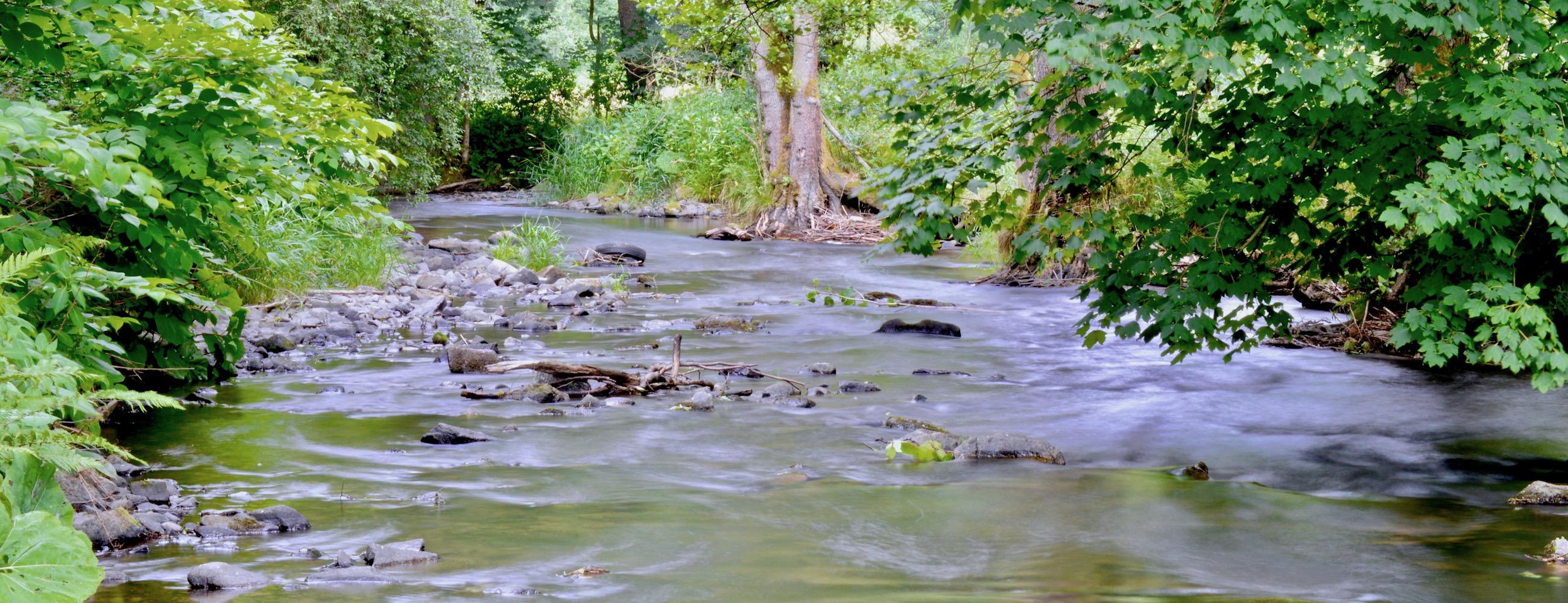 Forellengewässer NRW