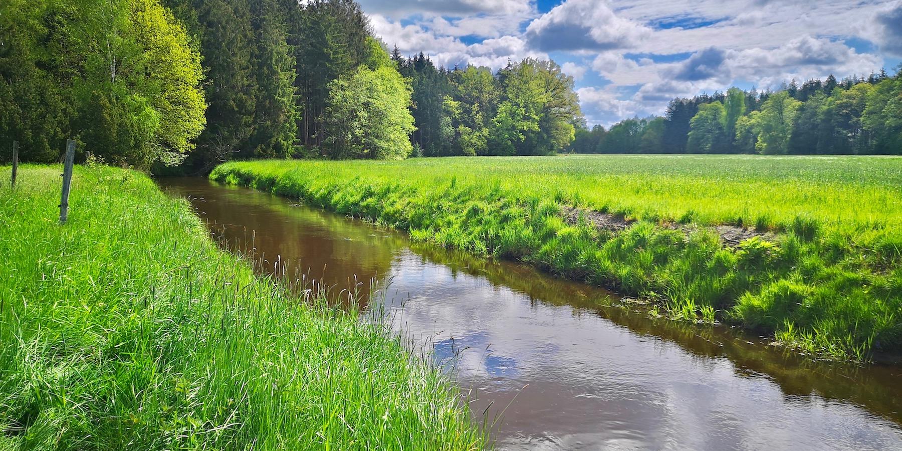 Forellenbach Niedersachsen